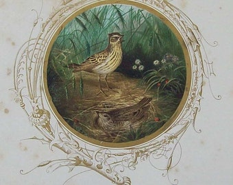Antique Skylark illustration