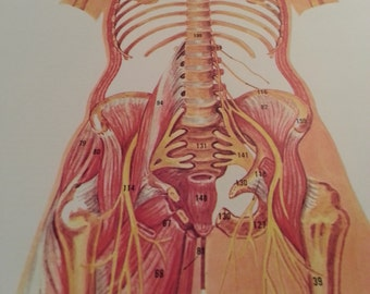 7 double sided anatomy pictures
