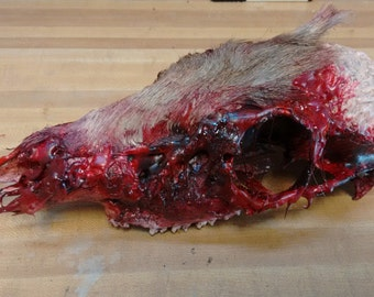 "Deer ""Brains"" Halloween Horror Prop **Price REDUCED!**"