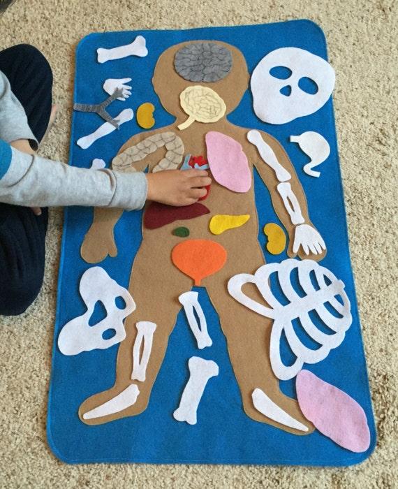 Anatom a humana fieltro educativa partes por for Mural de los 5 sentidos