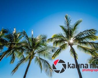 SALE Palm Trees Photograph, Beach Print, Airlie Beach, Whitsundays, Wall Art, Home Decor, Travel, Landscape