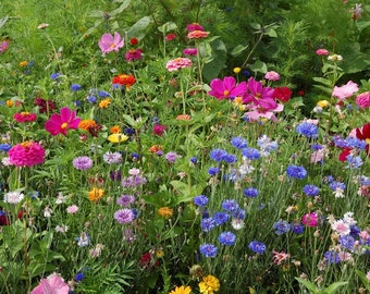 2,000 Seeds Wildflower Mix Seeds Pacific Northwest Wildflower