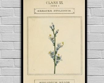 Vintage Flower Art - Triggerplant Flower - Vintage Botanical Art Print - Floral Print/Canvas -  Botanical Wall Prints - 223