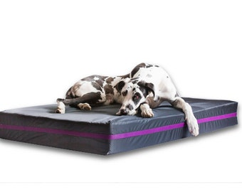 Dog beds for large dogs - black and purple - dog bed - XXL