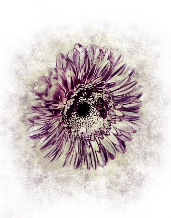 Vintage Purple Gerber Daisy Photo Print by PaintedBuffaloDecor