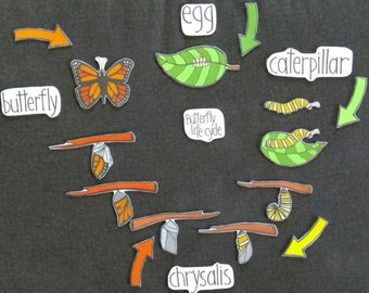 Life Cycle of a Butterfly Felt Set // Flannel Board // Cognitive Learning //  Science // Nature