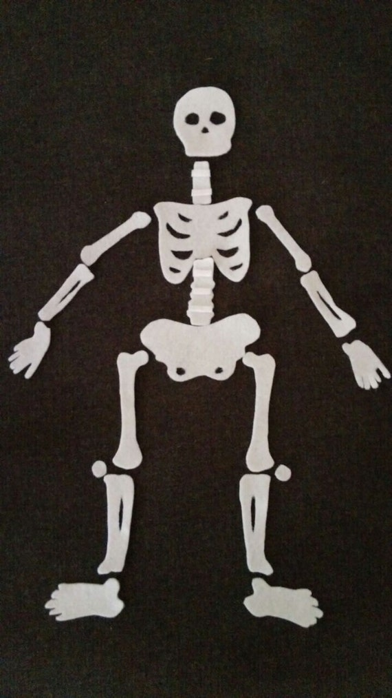 Human anatomy song