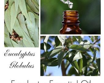 Eucalyptus Oil, Eucalyptus Essential Oil, 100% Pure Authentic Eucalyptus EO