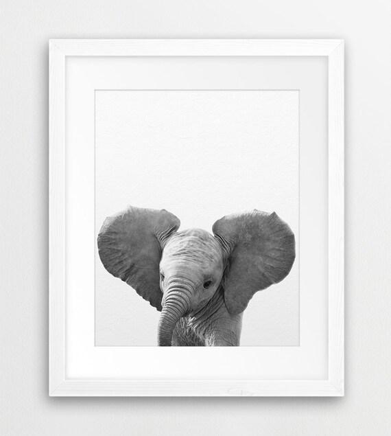 Elephant Print Nursery Animal Wall Art Baby Elephant Photo