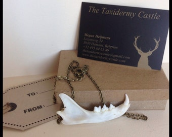 Cat jaw necklace / osteology / taxidermy