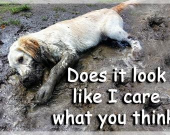 Golden Retriever Dog Funny Fridge Magnet Gift