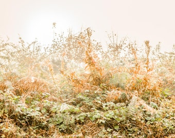 Photography on wood - hedge with cobwebs in the morning fog