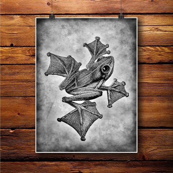 Frog print amazon decor water poster home decor bw260 by for Home decorations amazon