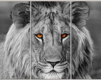 3 Panel split Black white Lion Canvas Print Art. Eyes colored. for home office wall decor and interior decor. Great for Holiday gifts