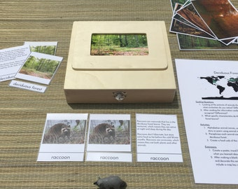 Montessori Biome Box Deciduous Forest - Objects & Three/Four Part Cards