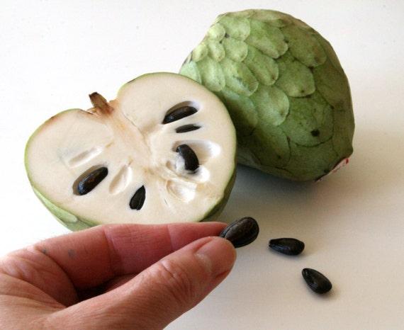 how to eat custard apple cherimoya
