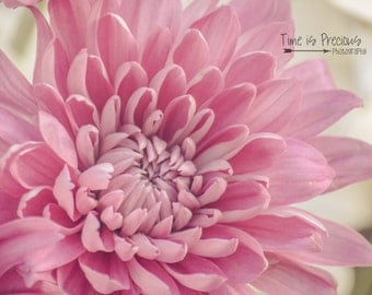 Baby Pink Mums,Flower Photography,Nature Print,Nature Photography,5x7,8x10,11x14,Wall Art,Nursery Art,UNFRAMED, Pink Flowers,Wall Hanging