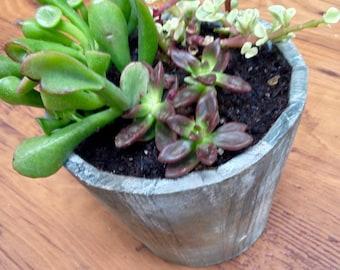 Succulent Planter (Ogre/Swamp)