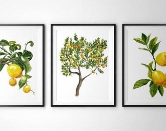 Botanical prints - Set of 3 prints(8x10).Lemon tree wall art.Lemon print.watercolor painting.Yellow home decor.Fruit prints.Lemon posters.