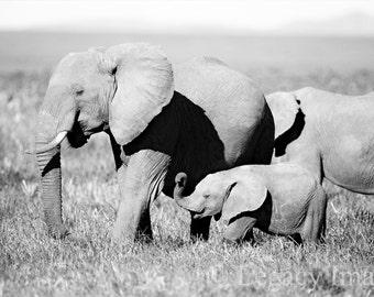 Elephant, Photography, Baby Elephant, Photo, Wildlife Photography, Black, White, Africa, Wildlife, Nursery, Wall Art, Baby Animal, Animal
