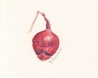 original watercolor red onion