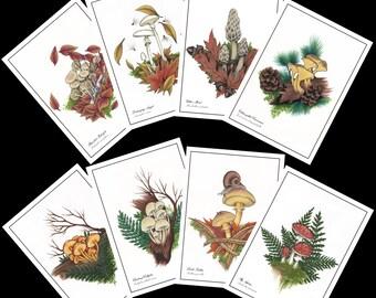 Mushroom Postcard Set- Wild Mushrooms, Stationary, Postcard Set, Nature Postcards, Hand-Drawn Postcards, Nature Gift, Shrooms, Cute Postcard