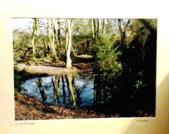 "Woodland Dell, Norfolk Woodland Reflection, Wood Scene, Signed Limited Edition A3 Landscape Color Photograph in 50cmx40cm (20""x16"") Mount"
