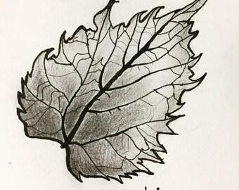 Lucky Leaf Ink Sketch