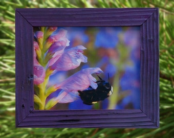 Bumblebee on Obedience Flower