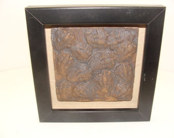 Framed Ceramic Fossil Tile