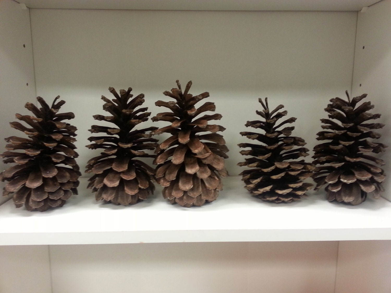 Large georgia pine cones by verandawarmsprings on etsy for Large pine cones
