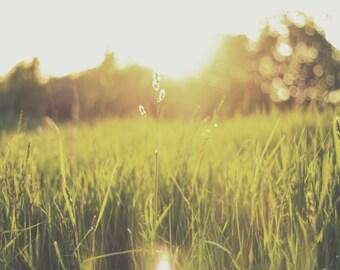 Sunset Meadow Print