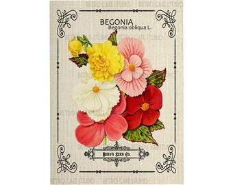 Digital Download Vintage Begonia Seed Packet Illustration Clip Art Transfer Iron On; 1060