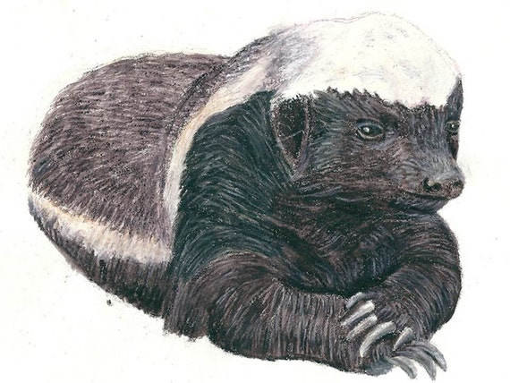 A Honey Badger Watercolor Painting. An A4 Badger Giclee Print