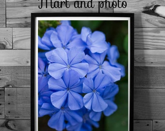 Flower photography, purple violet flower, color photography, instant download, printable art, home decor, nature photography