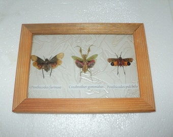A collection of 3 exotic insects in the frame !