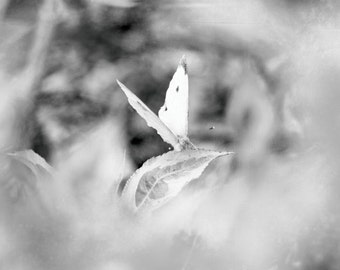 Nature photography print, butterfly photography, black and white photography, nature decor