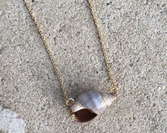 Real Sea Shell Necklace with Gold Accents