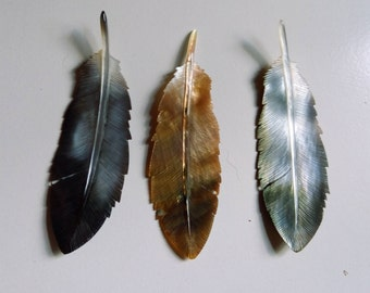 shell tail feathers
