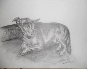 wolf hound