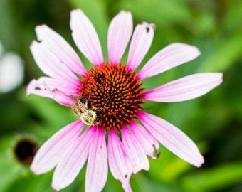 Nature Photography, Bumblebee Flower Print, Wall Decor, Home Decor, Wall Art, Fine Art