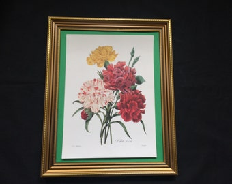 Botanical Art By Redoute Superb Lithographic Print of the Carnation