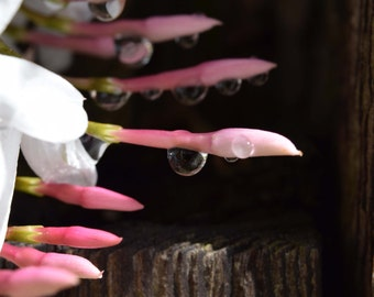 L8 - Pink Droplet 3