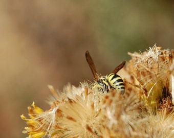 Y23 - Yellow Jacket/Wasp