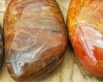 Polished Petrified Fossil Wood Specimen -  z1