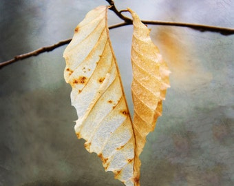 Nature Photography, Leaves, Fine Art Photography, Heart-shaped