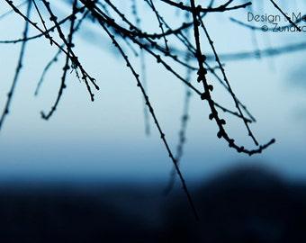 Glimpse - Photography Print, Nature, Home Decor