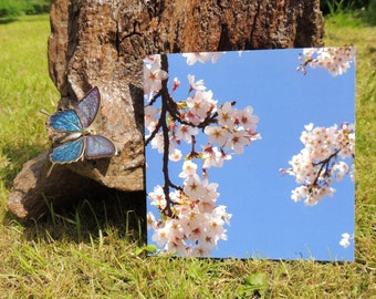 Blossom Greetings Card - Blank. Blue Sky and Blossom Photograph