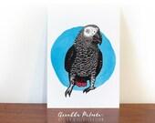 African grey parrot, postcard, parrot art, bird illustration