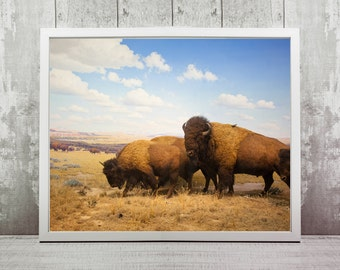 Yellowstone Bison Print, Instant Download, Travel Photography, Home Decor, Nursery Art, Travel Prints, Nature Photography, Animal Prints